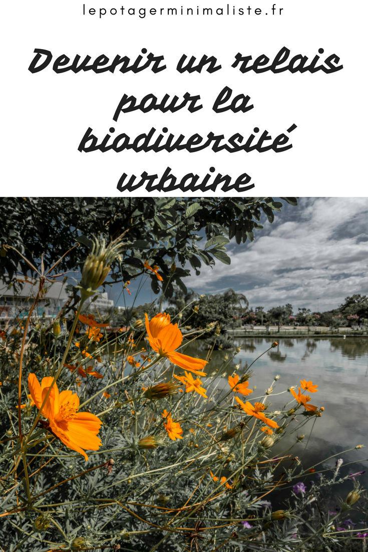 biodiversité-ville-potager-urbain-pinterest