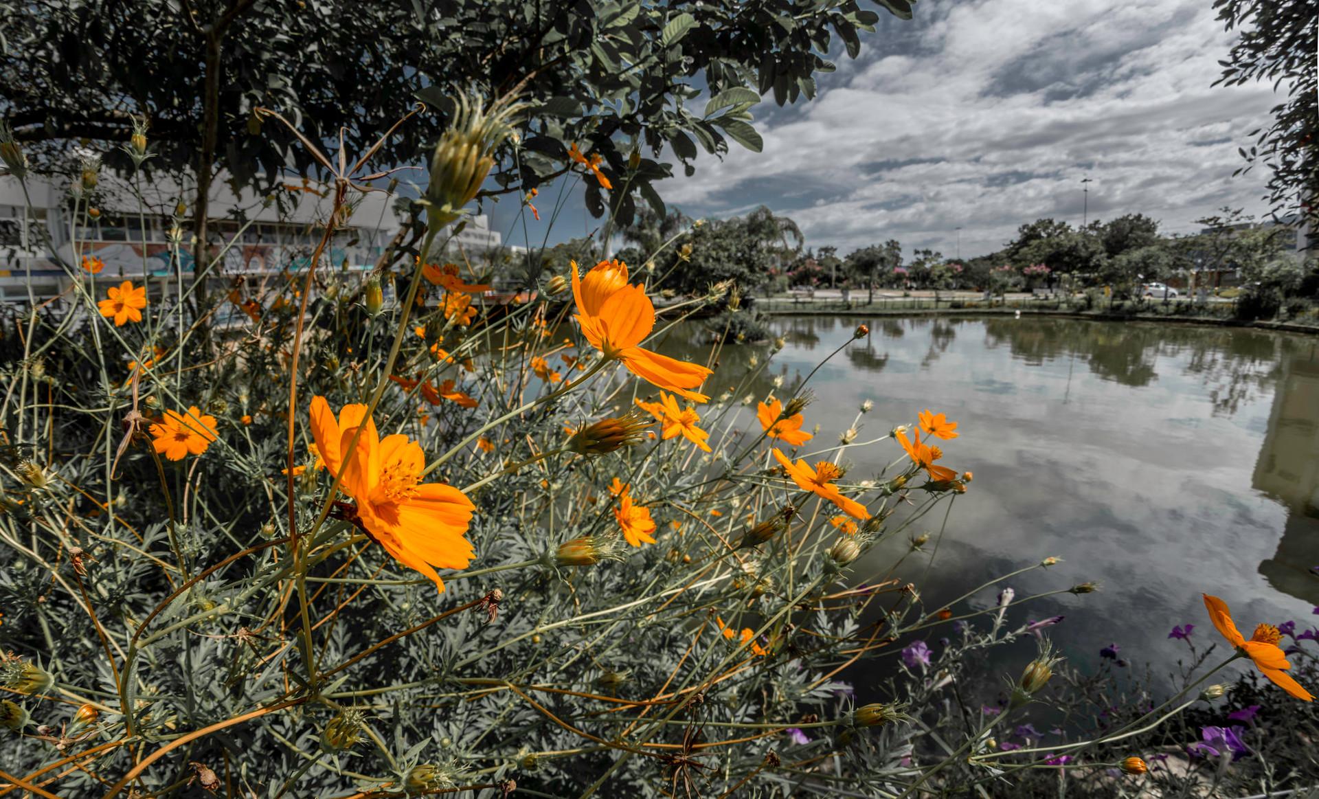 Biodiversité ville potager
