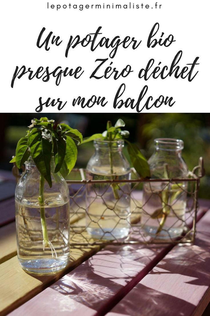 bouture-basilic-potager-bio-zero-dechet-pinterest