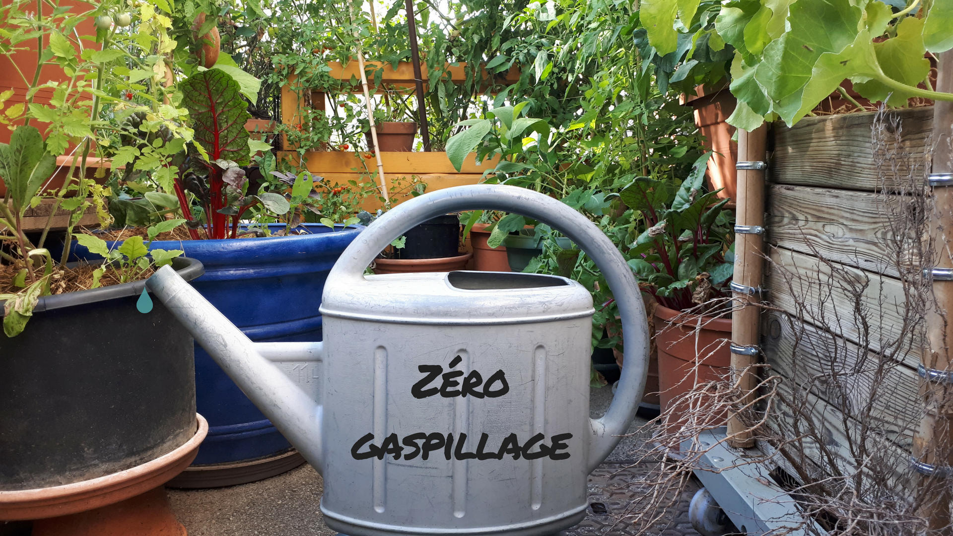 Comment arroser ses pots de fleurs en mode «zéro gaspillage»