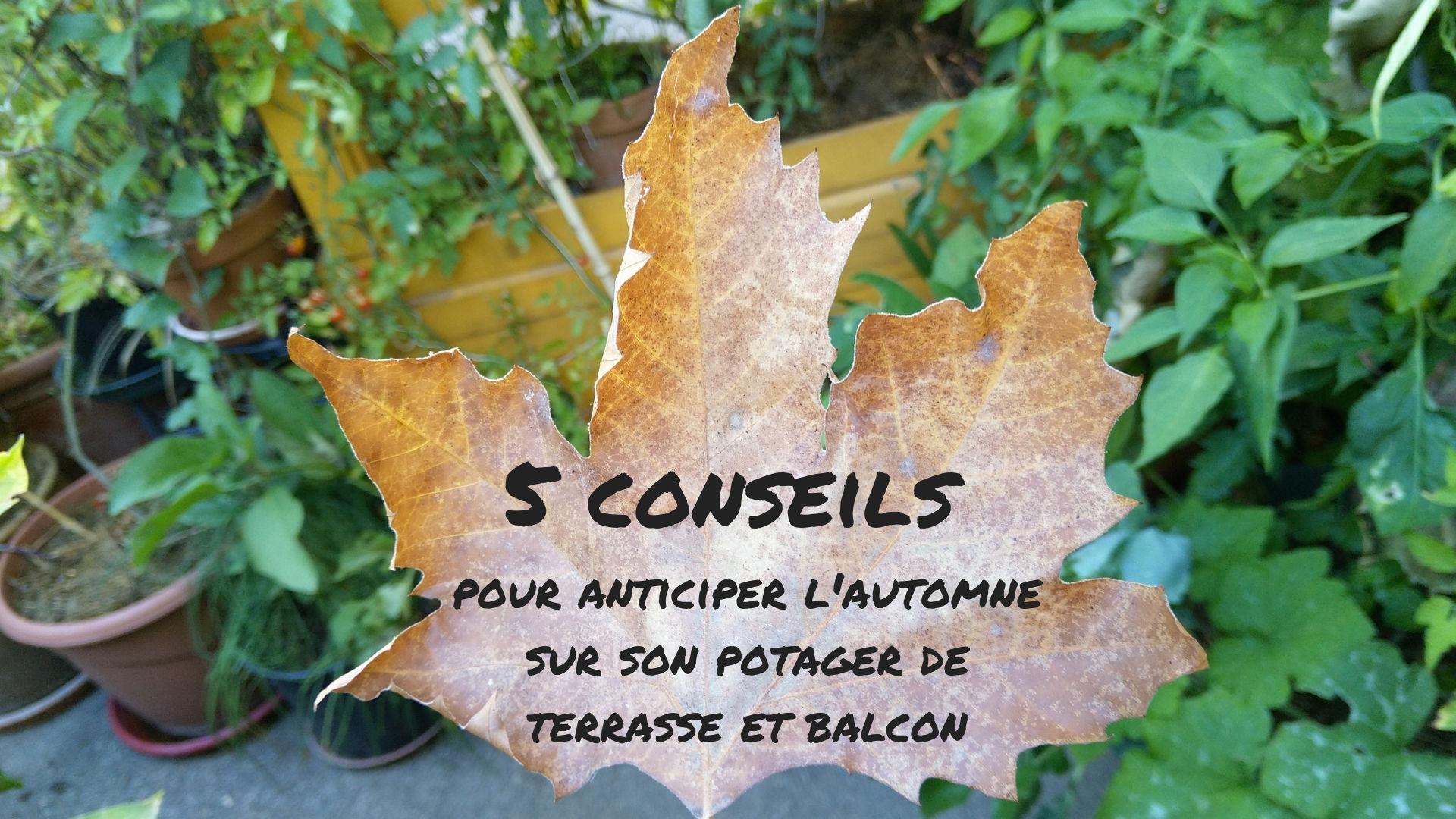 5-conseils-automne-potager-terrasse-balcon
