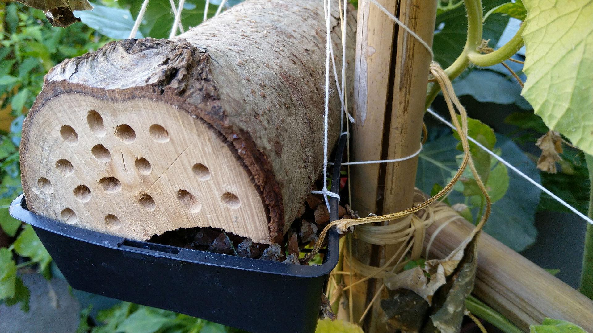 buche-hotel-insectes-abeille-potager-urbain