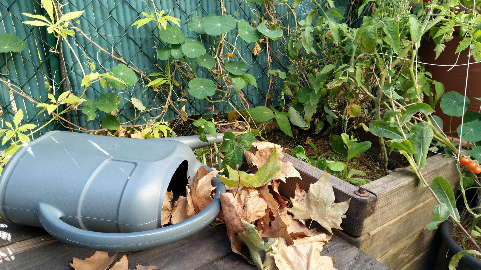 arrosoir-pot-fleurs-automne-potager-terrasse