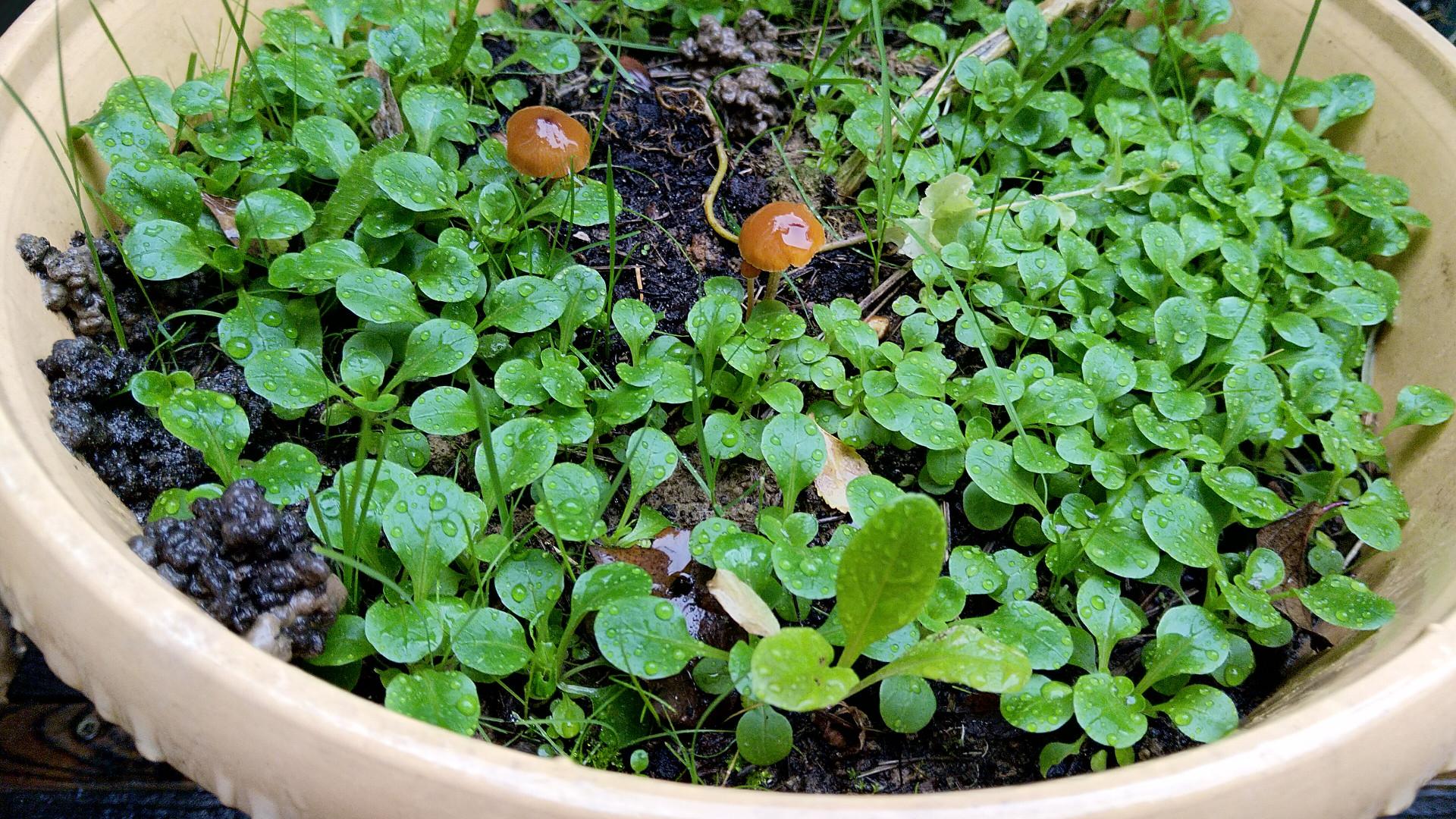 vers-terre-pots-fleurs-sol-vivant