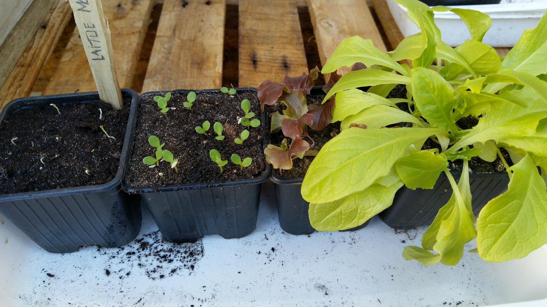 date-semis-potager-balcon-terrasse