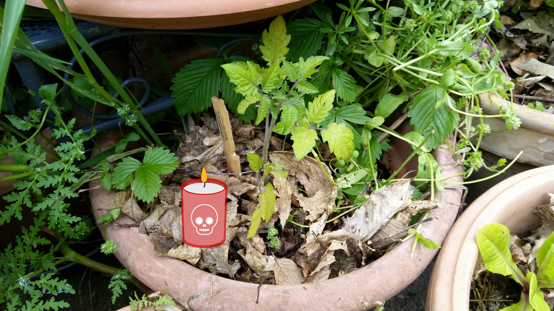 Une plante en pot de fleurs qui ne pousse pas, elle meurt