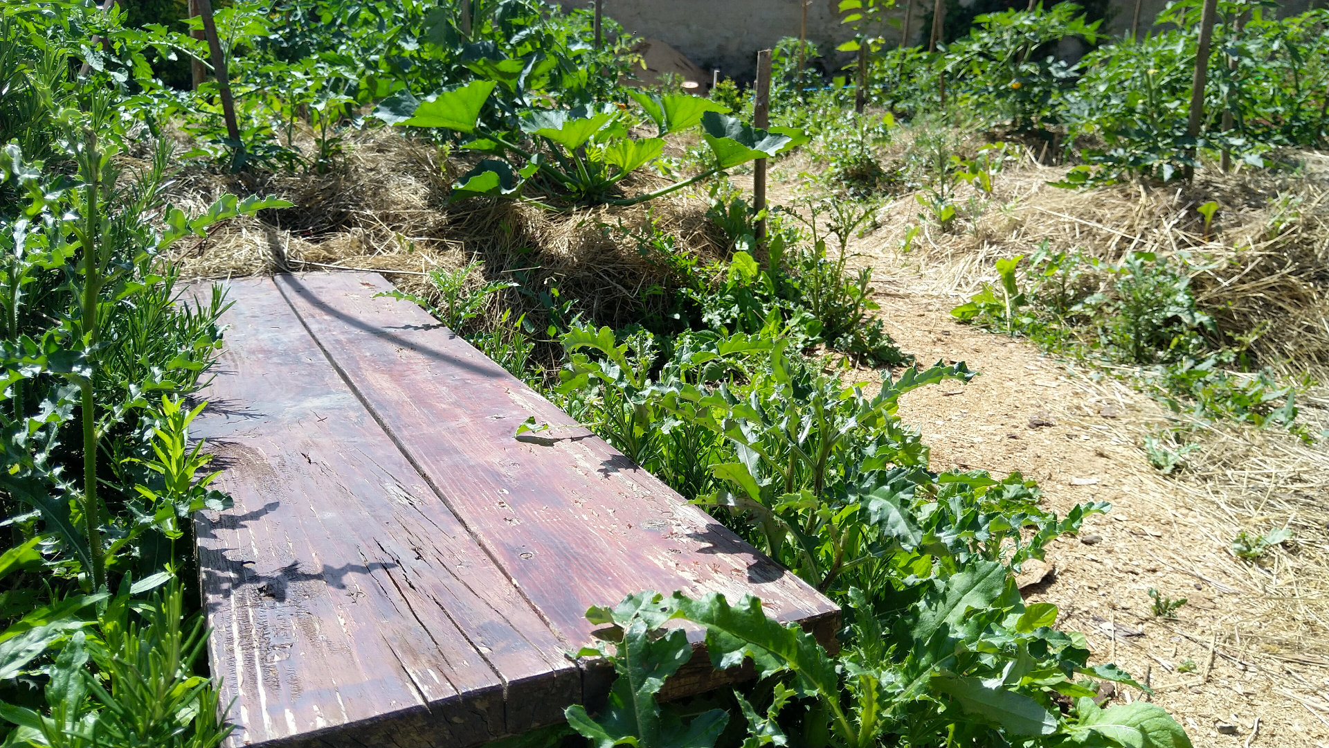 observation-permaculture-potager-jardin-partage