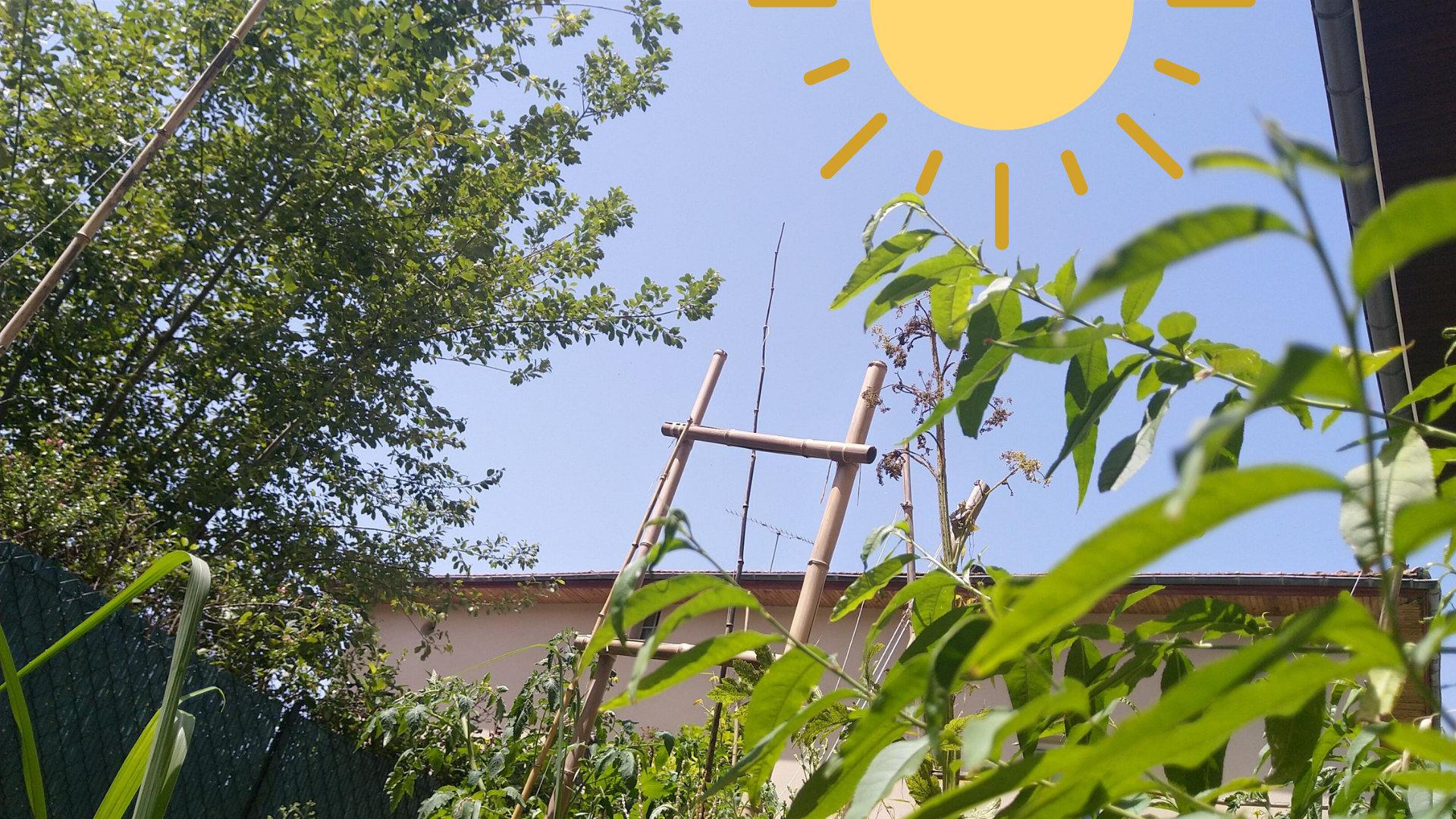 rechauffement-climatique-vegetalisons-ville-premaculture