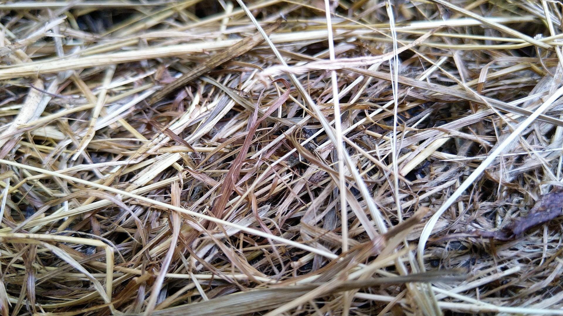 pailler-ete-hiver-paillage-permaculture