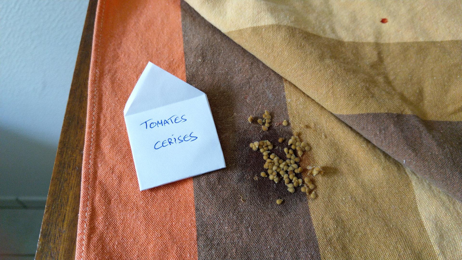 Quand et comment récolter les graines de tomate ?