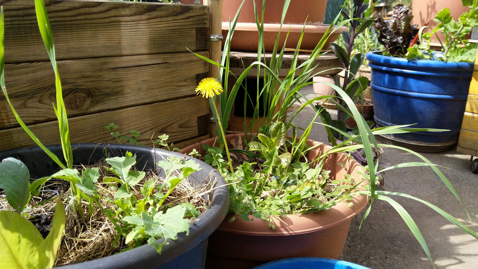 design-permaculture-amenager-balcon-terrasse-