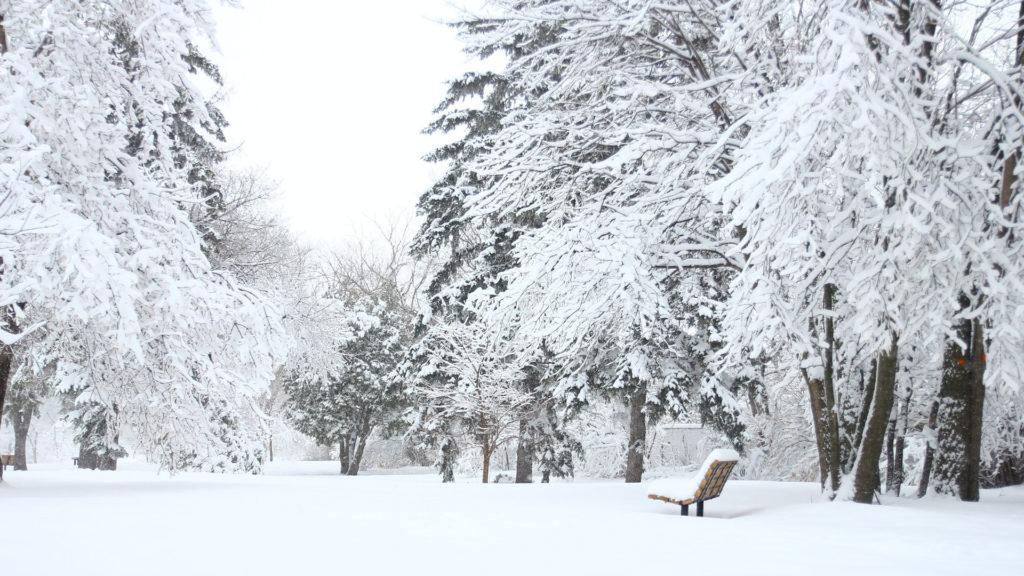sapin-neige-parc-municipal-permaculture