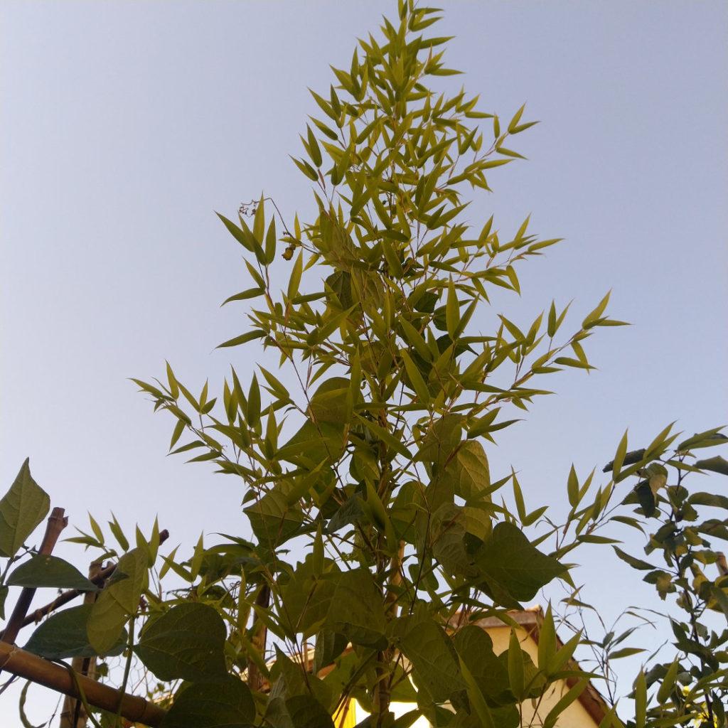 bambou-pot-fleurs-ombre-balcon