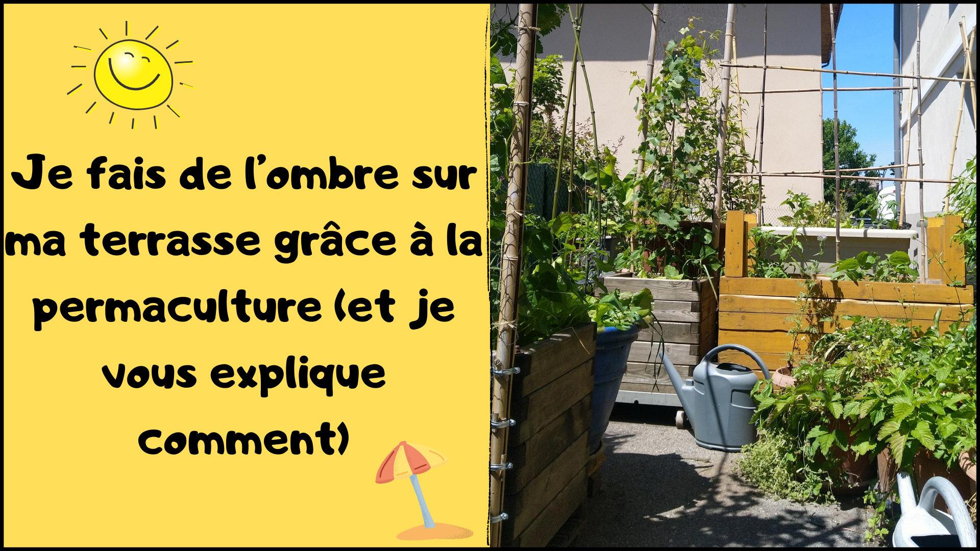 Je fais de l'ombre sur ma terrasse grâce à la permaculture (et je vous explique comment)