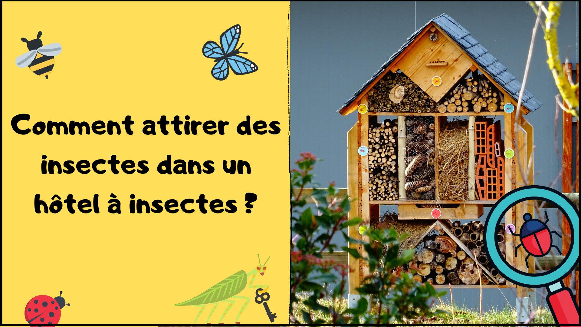 Comment attirer des insectes dans un hôtel à insectes ?