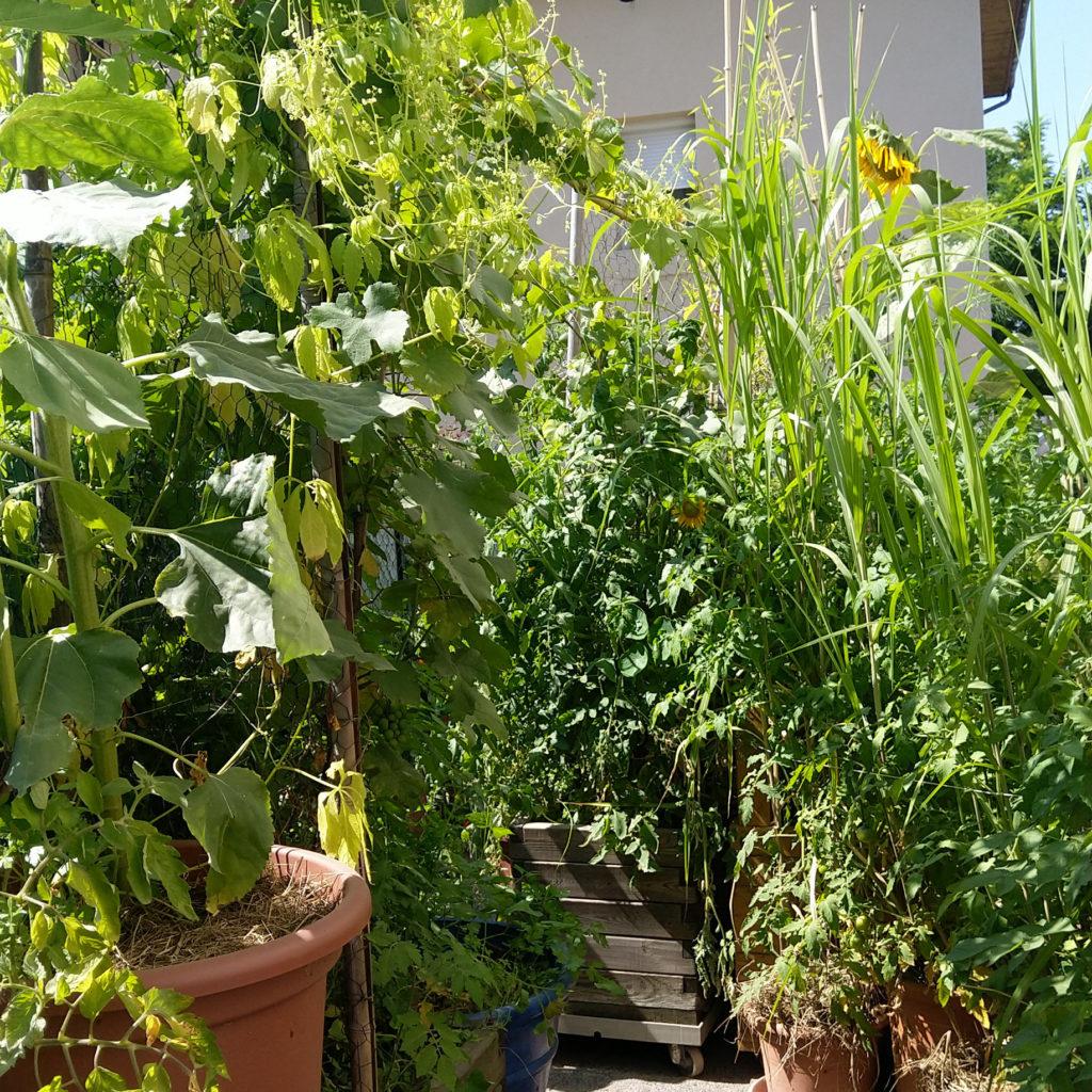 jungle-urbaine-comestible-balcon-terrasse
